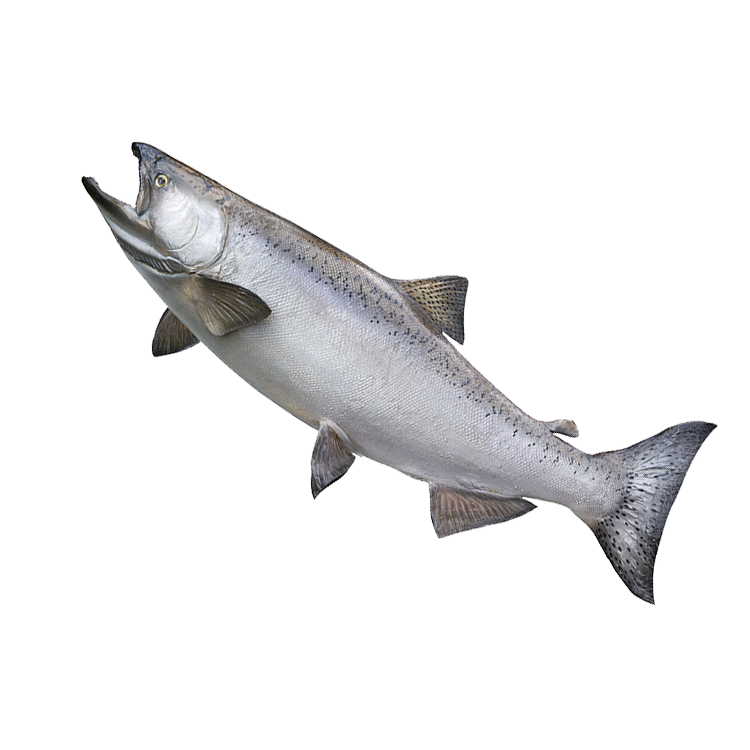 king salmon fishing charter rental in door county wisconsin